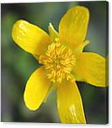 Yellow Weed Flower Canvas Print