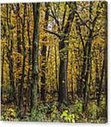 Yellow Woods On A Rainy Day Canvas Print