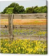 Yellows Plus Canvas Print