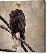 Yellowstone Bald Eagle Canvas Print