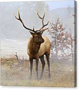 Yellowstone Bull Elk Canvas Print