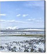 Yellowstone Landscape In Spring Canvas Print