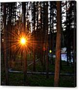 Yellowstone - Sunset Through The Trees Canvas Print