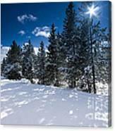 Yellowstone Sunshine Canvas Print