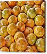 Yep Oranges Canvas Print