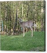 Yes Deer Canvas Print