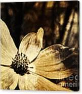 Yesterday's Flower Canvas Print