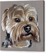 Yorkshire Terrier- Drawing Canvas Print