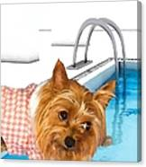 Yorkshire Terrier - This Is The Life Canvas Print