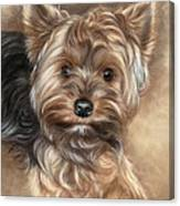 Yorkshire Terrier Canvas Print