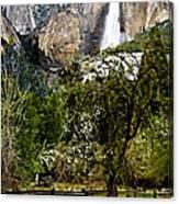 Yosemite Apple Orchard  Canvas Print