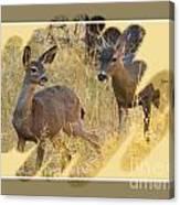 Yosemite National Park - Deer Canvas Print