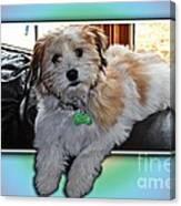 Yoshi Havanese Puppy Canvas Print