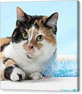 You Had Me At Meow..... Canvas Print