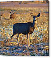 You Have Her Attention Canvas Print