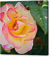 You Love The Roses - So Do I Canvas Print