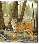 Young Bobcat    Canvas Print