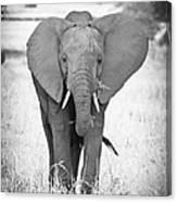 Young Bull Elephant Canvas Print