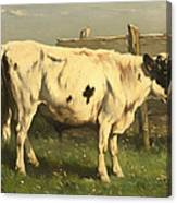 Young Bull Canvas Print