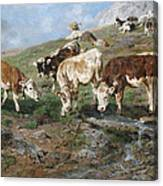 Young Cattle In Tyrol Canvas Print