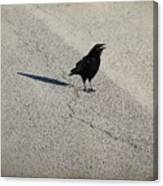 Young Cawing Crow Canvas Print