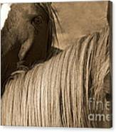 Young Colts Canvas Print