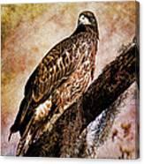 Young Eagle Pose II Canvas Print