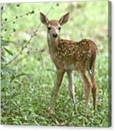 Young Fawn In The Woods Canvas Print