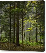 Young Forest Canvas Print