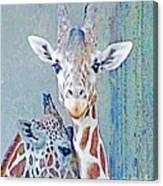 Young Giraffes Canvas Print