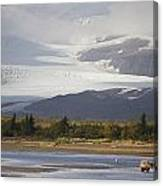 Young Grizzly Fishing At Hallo Bay Canvas Print