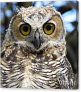 Young Hooter  Canvas Print