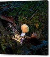 Young Lonely Mushroom 2 Canvas Print