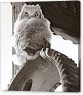 Young Owl On Wheel Canvas Print