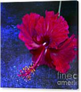 Young Passion... Canvas Print