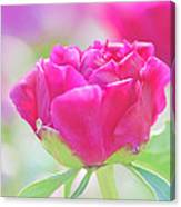 Young Peony Canvas Print