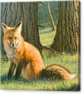 Young Red Canvas Print