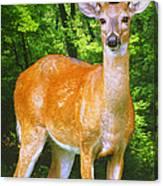 Young Whitetailed Deer Buck Digital Art Canvas Print