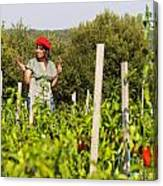 Young Woman Harvesting Red Peppers Canvas Print