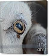 Your Friendly Neighborhood Goat 2 Canvas Print
