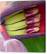 Your Treasure - Mai'a Maoli - Tropical Hawaiian Banana Flower  Canvas Print