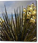Yucca Blooms Canvas Print