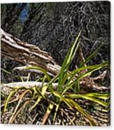 Pedernales Park Texas Yucca By The Dead Tree Canvas Print