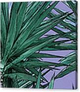 Yucca Tops Canvas Print