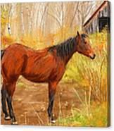 Yuma- Stunning Horse In Autumn Canvas Print