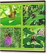 Zabulon Skipper Butterfly - Poanes Zabulon Canvas Print