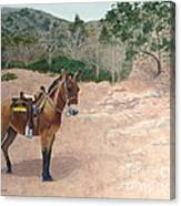 Zachary The Mule Canvas Print