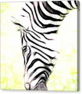 Zebra Art Canvas Print