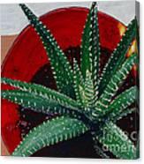 Zebra Cactus In Red Glass Canvas Print