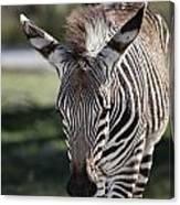 Zebra Crossing V7 Canvas Print